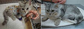 """Животных спасают в ходе уникальных операций, по сложности не уступающих """"человеческим""""."""