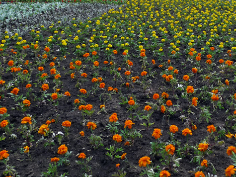 Весна обманула соловьев вслед за сорняками