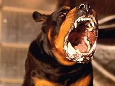 Неблагодарные псы подвели санитарных врачей