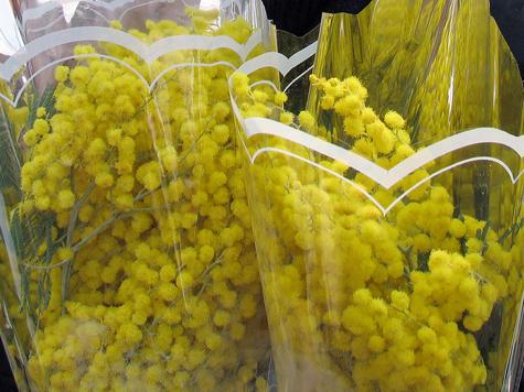 Мимозу запретили подмешивать в биодобавки