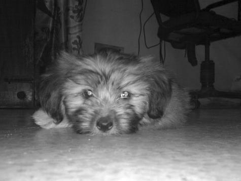 Певец Вадим Казаченко поставил мемориал любимой собаке