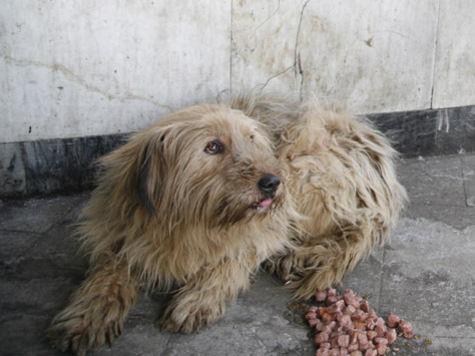 В Москве пересчитают бездомных собак