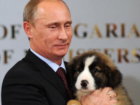 Новой собаке Путина предложили имена: Йода, Бойко, Йогурт и Шарик