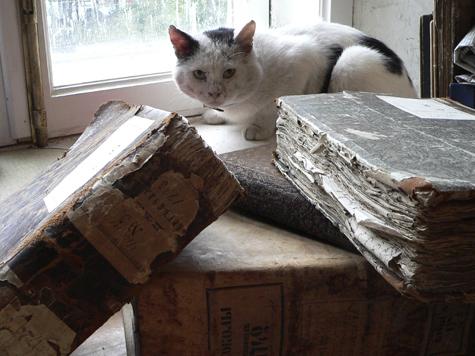 Старинные документы мытищинцев выйдут сухими из воды