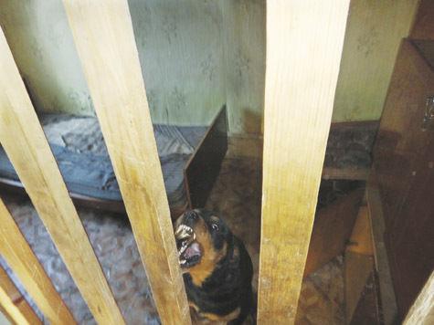 Убийца пенсионерок в Подмосковье приговорен к 20 годам тюрьмы