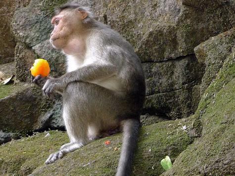 Для обезьян в зоопарке установят обменные пункты