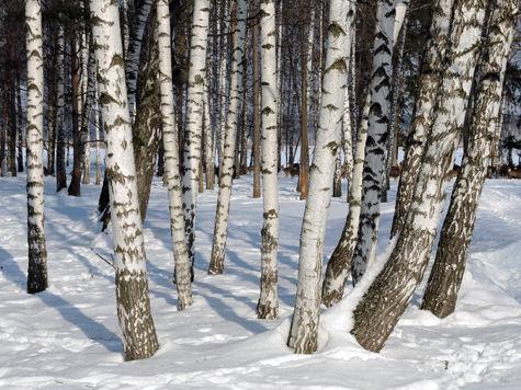 Селятинский лес — под «видеоконтролем»?