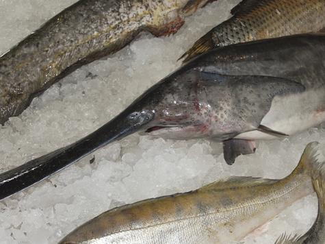 В рыбу начнут добавлять масло еще при жизни