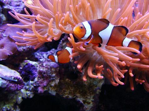 Домашний риф