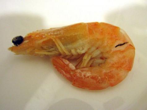 Древние креветки видели так же зорко, как и те, что мы едим