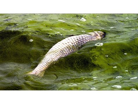 Рыба в столичных реках сварилась заживо