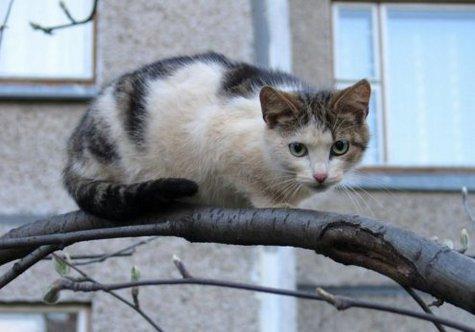 Жизнью поплатился в понедельник гастарбайтер из Узбекистана, который по просьбе детей полез на дерево спасать кота в Люберецком районе Подмосковья
