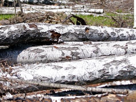 Пока удалось выиграть суд по части когда-то зеленой территории: суд вынес решение о незаконности вырубки лишь 6 полос лесного массива