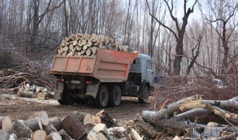 Пока будет возможность сбыта нелегально добытой древесины, бороться с незаконными рубками практически бесполезно