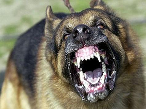 Если гладить собаку, которая испытывает боль, она моментально станет агрессивной