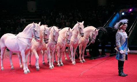 """Дрессировщик Сарват Бегбуди: """"После лошади никакой хищник не страшен"""""""