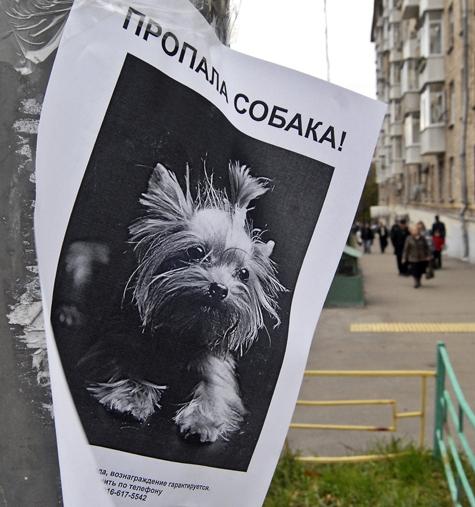 «Пропала собака» — подобные объявления стали уже привычными в газетах, на уличных столбах, в Интернете