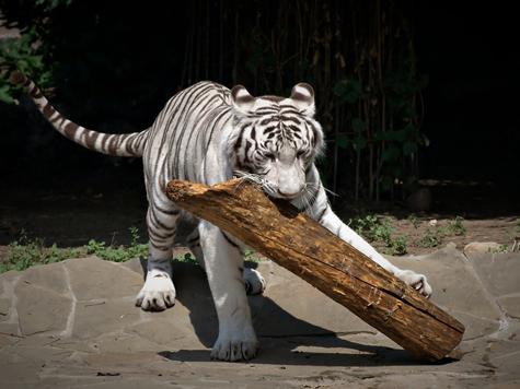 Посетителям зоопарка перешли по наследству игрушки хищников