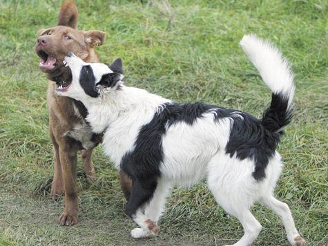 Безнадзорные животные — вина человека