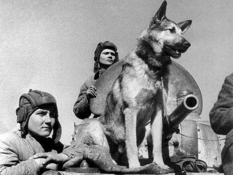 Голуби взрывали немецкие самолеты, а верблюды спасали Сталинград