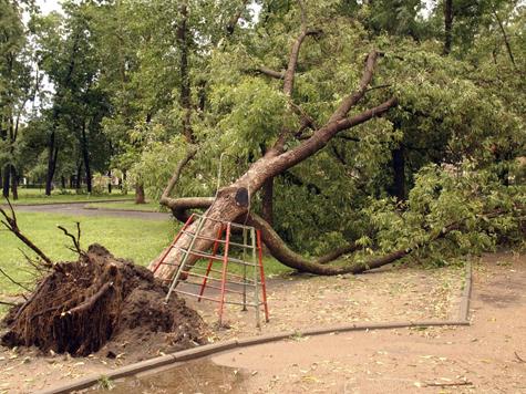 Ветер бил москвичей всеми частями дерева