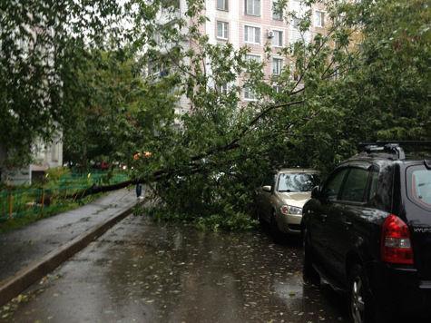 Столичную пенсионерку убило поваленное стихией дерево