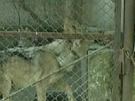 Мужчину поместили на всю ночь в вольер для милицейских собак