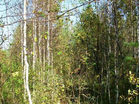 Лес уходит за забор