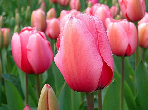 Цветы могут подорожать почти в два раза