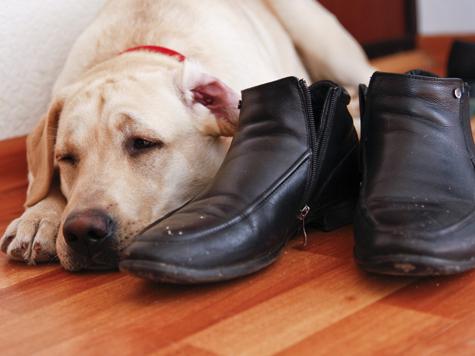 Есть собака — нет аллергии?