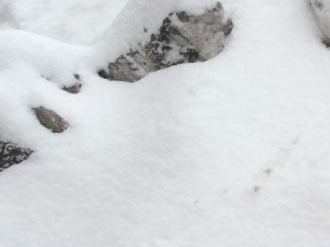 От снежного изобилия додефицита