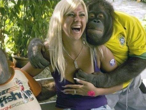 Девушка секс с шимпанзе