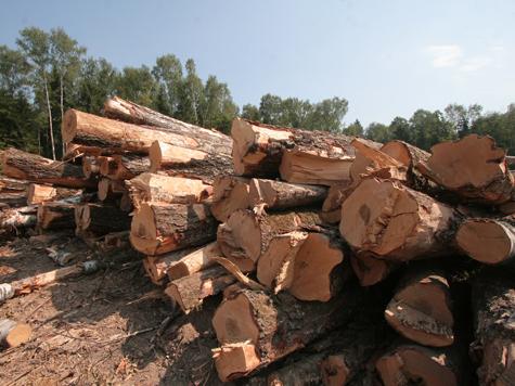 В Химкинском лесу рабочие жестоко избили активистов