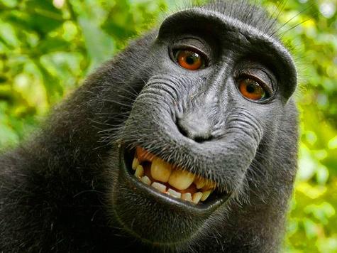 В индонезийском национальном парке обезьяна отобрала у путешественника фотоаппарат