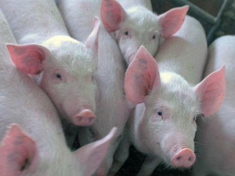 Китай хочет подложить свинью Америке