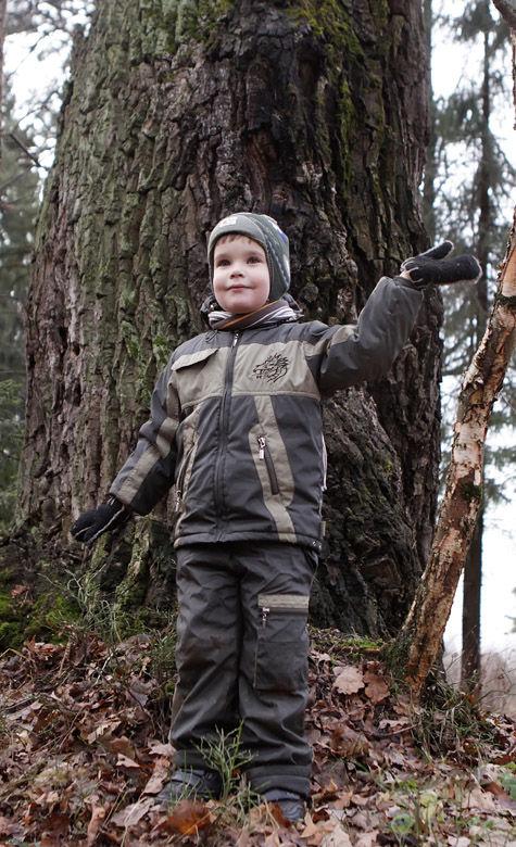В Сабурове фирма-однодневка хочет вырубить для випов 250-летний лес