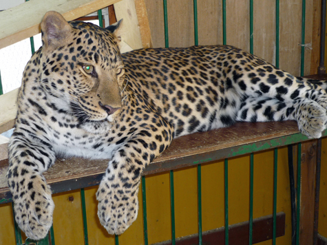 Животным в зоопарке не придется конкурировать с едой