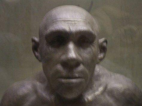 Глаза неандертальцев увеличились в виду необходимости адаптироваться к темным ночам