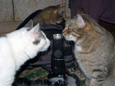 Попить кофе под аккомпанемент кошачьего мурлыканья можно будет в скором времени в Москве