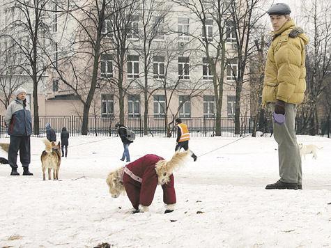 Закон цвета каки: за собачьи кучки хозяев будут штрафовать на 1000 рублей