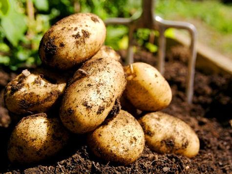 Картофель подорожал в среднем на 31,7%, овощи — на 25,9%