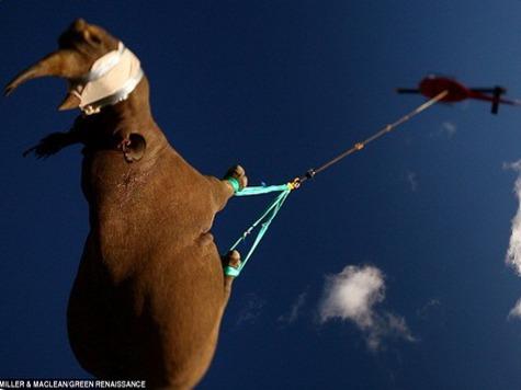 В Западной Африке полностью вымерли черные и яванские носороги