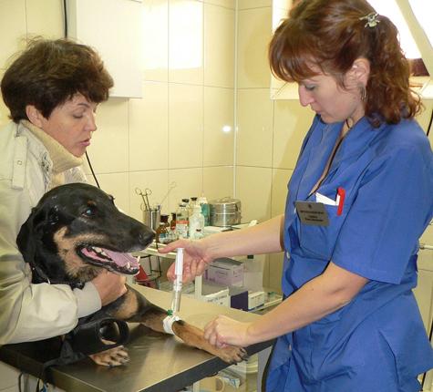 Ветеринарных врачей заставляют резать по живому