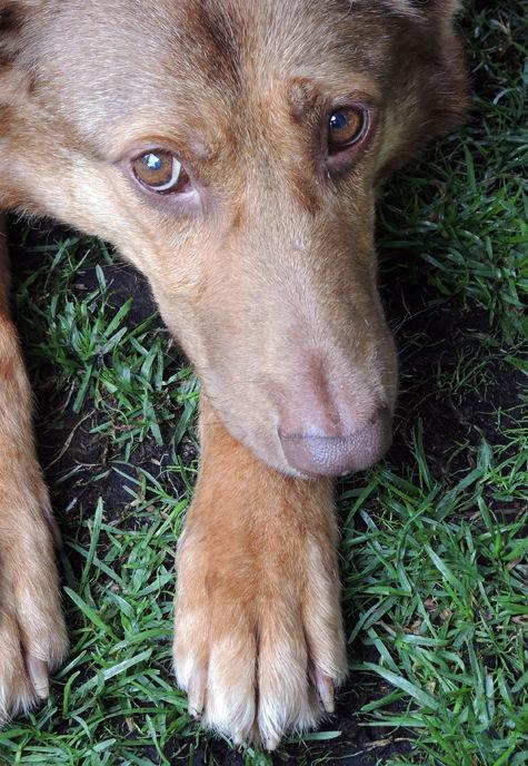 Хвост вертит собакой – и не только в переносном смысле