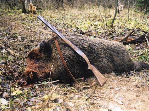 Историческое решение, принятое 15 сентября 2004 года Парламентом Великобритании, оставило в прошлом жестокие мучения тысяч лисиц, оленей, зайцев, живьем растерзываемых охотничьими собаками