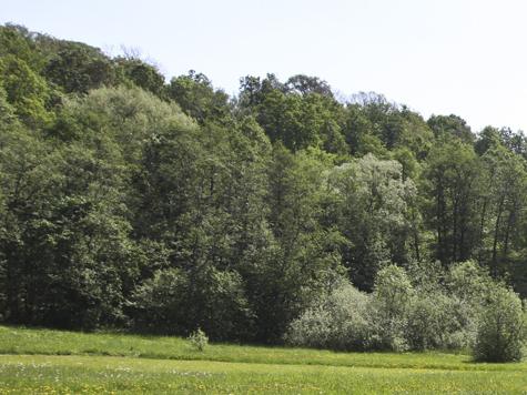 Подземка лес сбережет