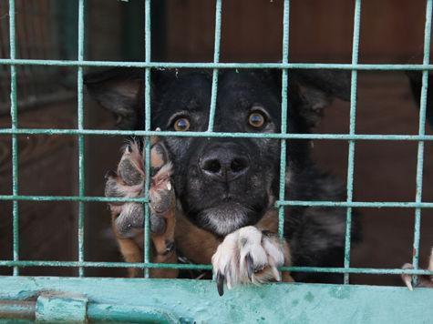 Расследование «МК»: как бездомным животным живется в приютах