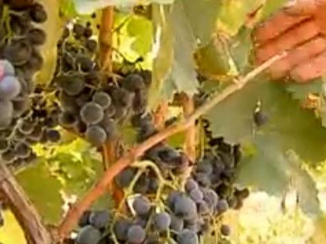 В Россию завезут 200 марок грузинских вин