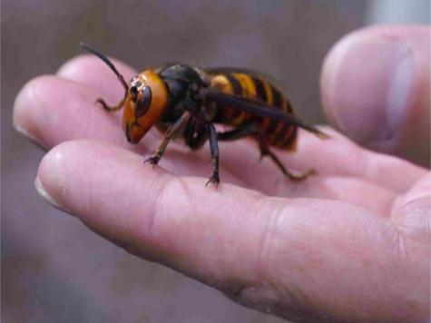 Королева пчела секси