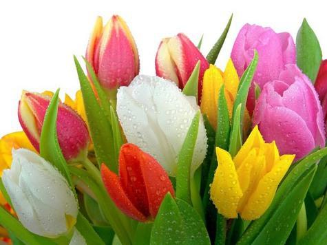 Цветы как достижение